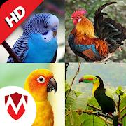 100 Bird sounds 14.5