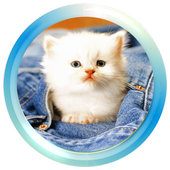 Cute Cat Wallpapers 1.0