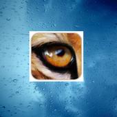 Indian Cheetah Browser 1.0
