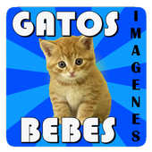 Gatos bebes - Imagenes 1.0.0