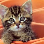 Kitten Cat Jigsaw Puzzles 1.0