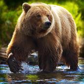 Bear Live Wallpaper : 7fon & LWP 10.1