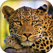 Leopard Live Wallpaper : 7fon & LWP 10.0