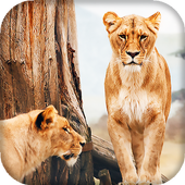 Lion Live Wallpaper : 7fon & LWP 10.0