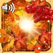 Autumn Sun Live Wallpaper 1.3
