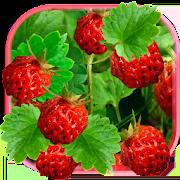 com.muspelheim809.berriesjuicylivewallpaper icon