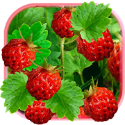 Berries Juicy Live Wallpaper 1.2
