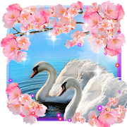 Swans Spring Love live wallpaper 1.5