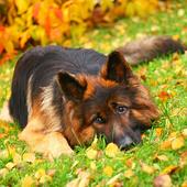 Faithful Dog LWP 1.0