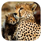 Stuarts' African Mammals 1.0