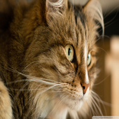 Sliding Tiles - Cats 1.1