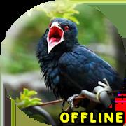 Jalak Kebo Gacor MP3 1.0.2