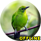 Suara Burung Cucak Ijo MP3 1.0.2