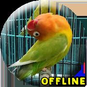 MP3 Lovebird Paud Offline 1.0.4