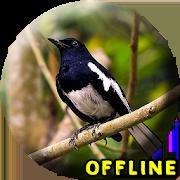 Suara Burung Kacer Full Isian MP3 1.1.2