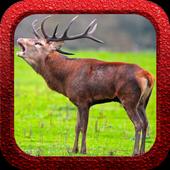 Red Deer Hunter 1.0