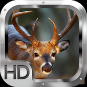 Whitetail Deer Adventure 1.0