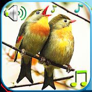 Birds Sounds & Ringtones 1.3