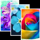 Flowers HD Wallpaper Pro 1.0