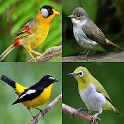 Birds Memory Game 3.0