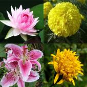Flower Memory Game 3.0