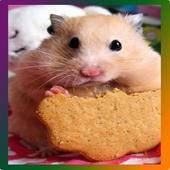 Tile Puzzle _ Hamster 1.00