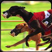 Greyhound Dog Racing 3D 1.1