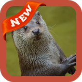 com.otter.wallpaper.freehdimages.ottercute.photo.bestpicture 3.0