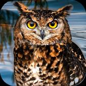Owl Bird Simulator 1.0