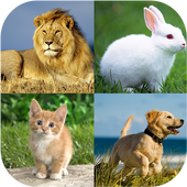 Animal quiz - Animal matching 3.0