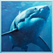 Wild Shark Revenge 2016