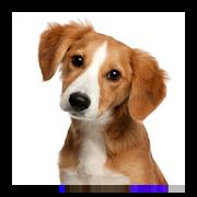 صدای حیوانات ، آموزش کودکان google_3.2