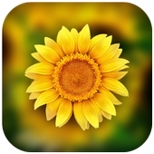3D Photo Gallery-Photo Manager-Photo Video Gallery 3.3