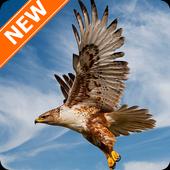 Falcon Wallpapers HD 5.0.0