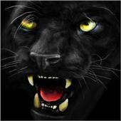Black panther ferocious 1.3