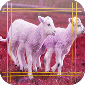 Sheep Jigsaw Puzzles 1.0