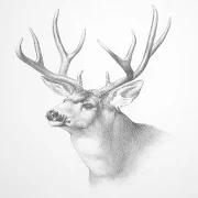 Animals Drawing 2.2.0
