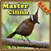 Master Kicau Cililin 1.0
