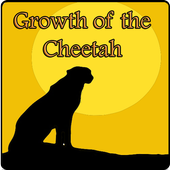 Growth of the Cheetah 1.0