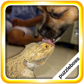Jigsaw Puzzles: Family Pet 1.8.9