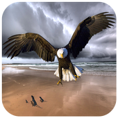Raptor Bald Eagle Puzzles 1.3