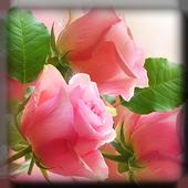 Flowers Live Wallpaper 1.0