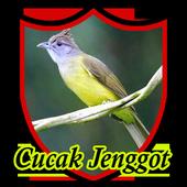 Master Kicau Cucak Jenggot 1.0