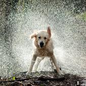 Cool Wet Dog at rain HD LWP