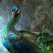 free peacock wallpaper 6.00