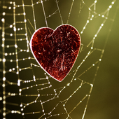 spider web wallpaper 5.00