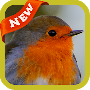 com.robin.wallpaper.freehdimages.robinphoto.bestpicture 3.0
