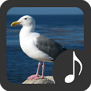 Seagull Sounds 2.0.1