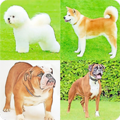 Guess The Dog Breeds Most Popular Dog Breeds Quiz 3.1.7z