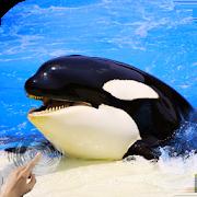 Orca Killer Whale 2.0